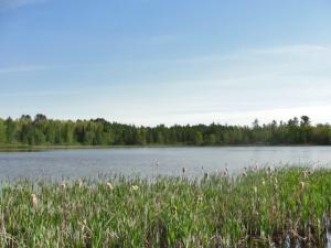 Bush Lake