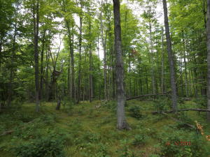 70 Acres County X Road, Wausaukee, WI 54177