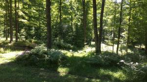 N13201 Secluded Trail, Silver Cliff, WI 54104