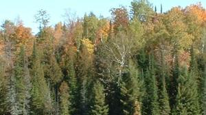 Sturgeon Dam Road, Niagara, WI 54151