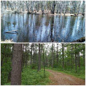6.75 acres Pike River Road, Wausaukee, WI 54177