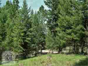 675 Montana Drive, Seeley Lake, MT 59868