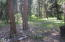 Mature Woods.