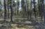 Surrounding forest has been cleaned up for fire-protection.