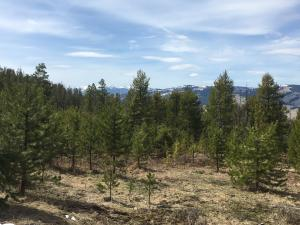 Trapper Ridge Road Ridge, Philipsburg, MT 59858