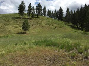 A2 Camp Creek Road, Sula, MT 59871