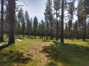 1104 Dancing Bear Trail, Bigfork, MT 59911