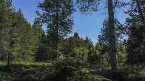 Nhn Graham Grove Lane, Trout Creek, MT 59874
