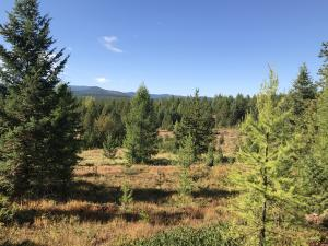 Lot 7 Lupfer Heights Avenue, Whitefish, MT 59937