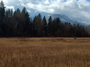 459 Bear Creek Road, Victor, MT 59875