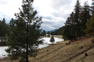 Unk Larch Lane, Saint Regis, MT 59866