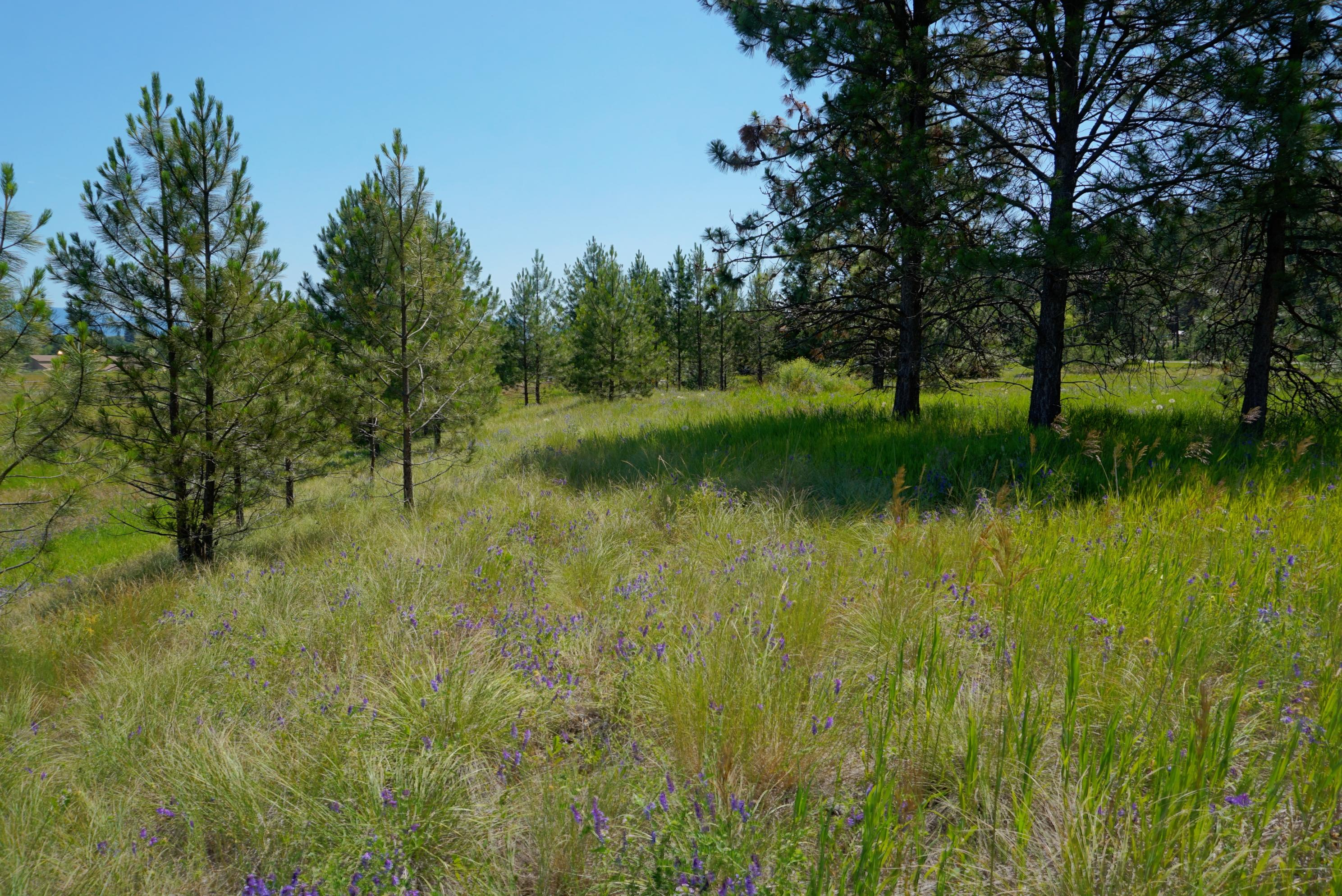 Property Image #11 for MLS #21901187