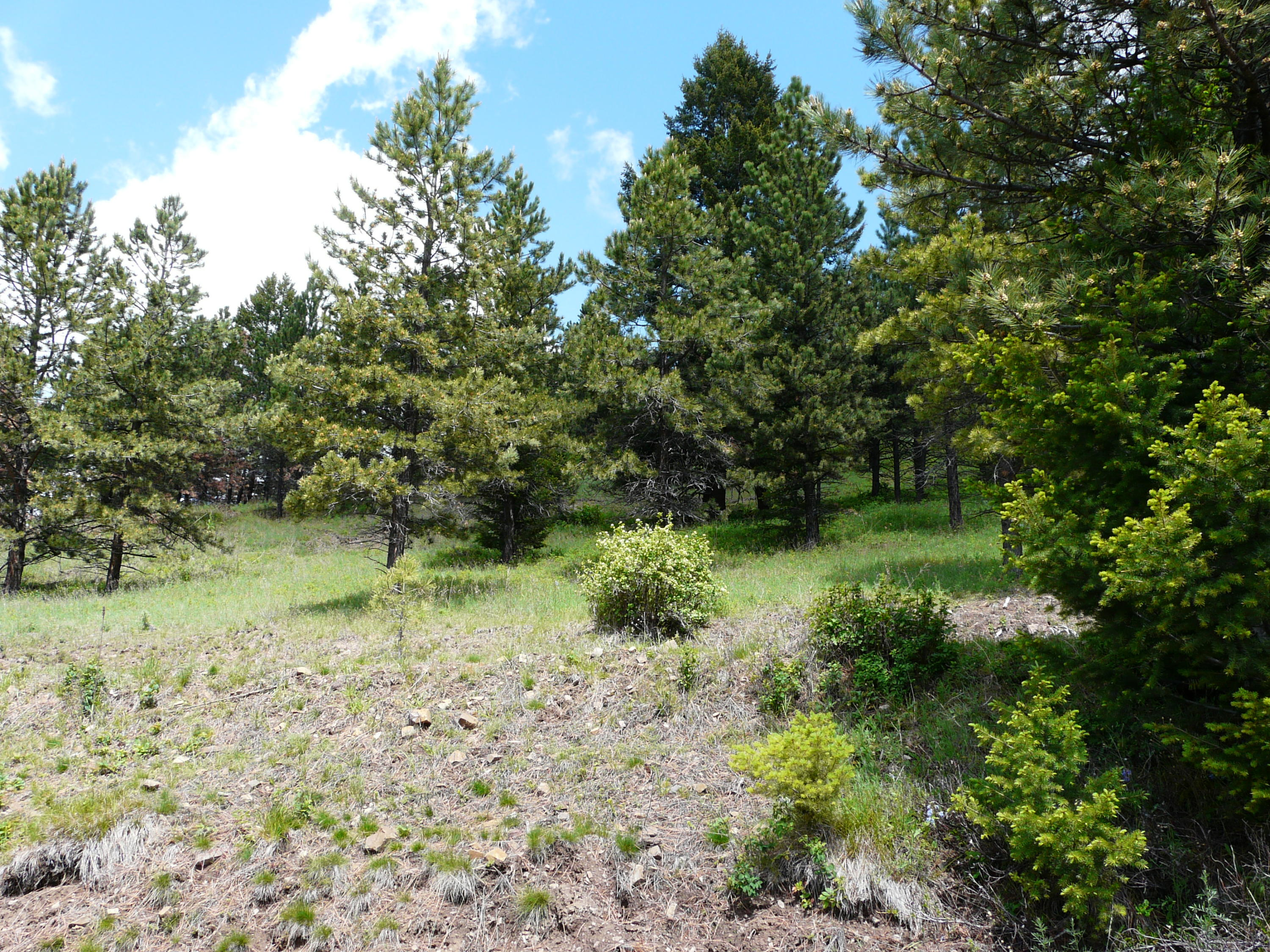 Property Image #1 for MLS #21902416