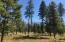 Meadow/Tree Mix