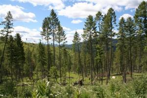 Nhn Ashley Lake Road, (Mountain Man), Kalispell, MT 59901