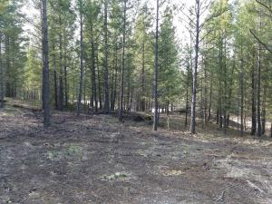 Lot 13 is one of the largest lots in Mariners Haven. I is bordered by Forest Service lands on 2 sides.