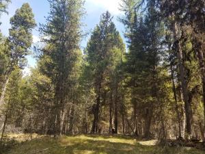 160 Sourdough Lane, Seeley Lake, MT 59868