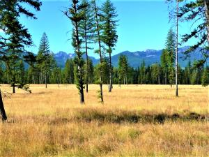 Lot 8 Glacier Creek Meadows, Condon, MT 59826