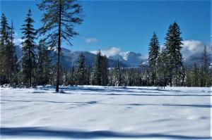 Lot 11 Glacier Creek Meadows, Condon, MT 59826