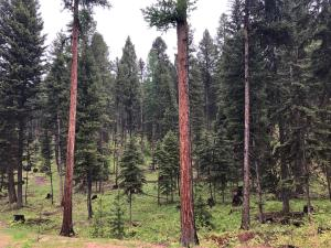 255 Grizzly Drive, Seeley Lake, MT 59868