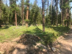 Nhn West Fork Petty Creek Road, Alberton, MT 59820