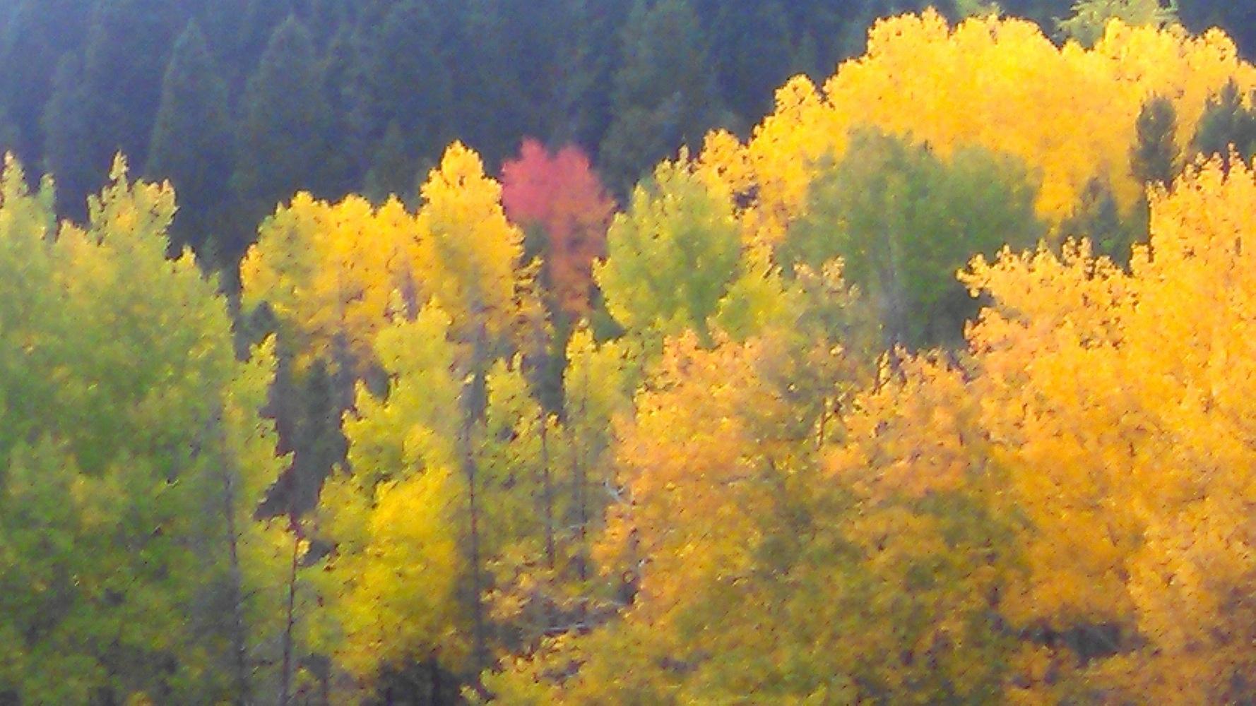Nhn Dry Cottonwood Creek, Warm Springs, MT 59756, MLS # 21912835 |  Berkshire Hathaway HomeServices Montana Properties
