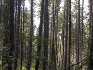 34 Big Springs Trail, East Glacier Park, MT 59434