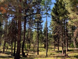 Nhn Montana Drive, Seeley Lake, MT 59868