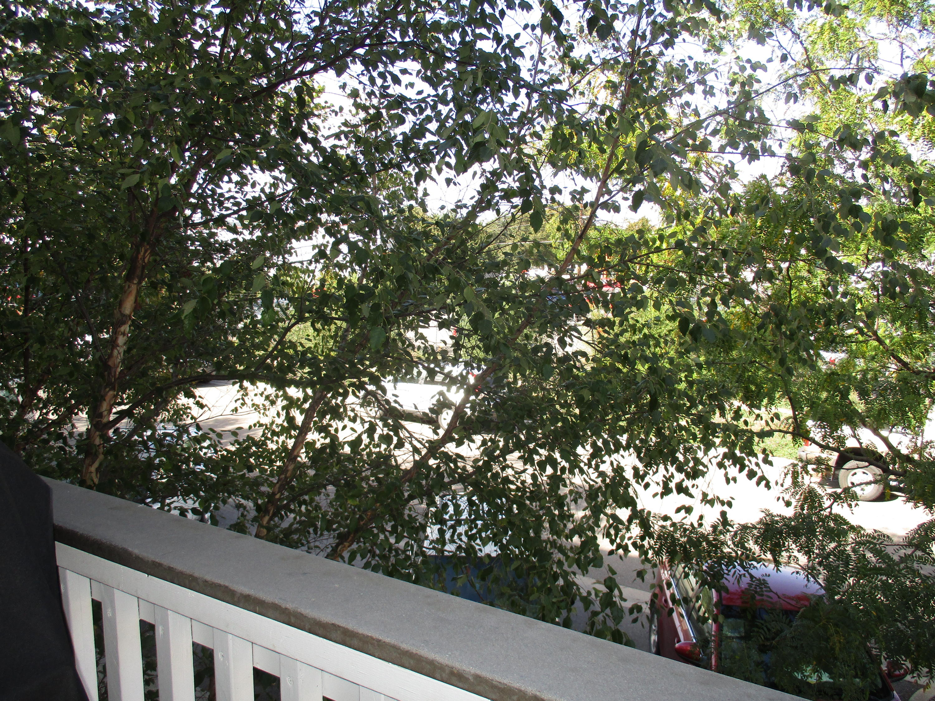 Property Image #14 for MLS #21916164
