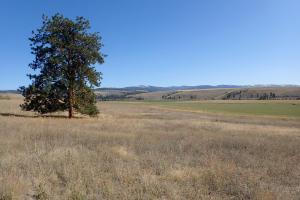 650 Xtreme, Florence, Montana