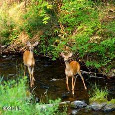 Stoner Creek Deer