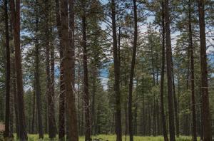 Nhn Dancing Bear Trail, Tract 2, Bigfork, MT 59911