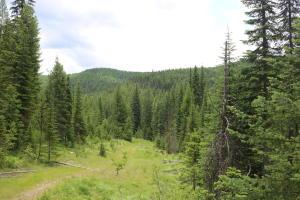 39a Packer Creek, Haugan, MT 59842