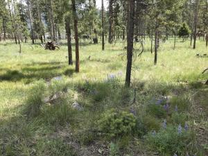 590 Frontier Court, Seeley Lake, MT 59868