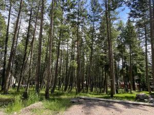 Looking through the trees towards Flathead Lake