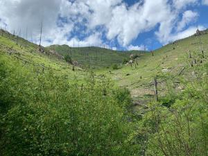 Nhn Blind Draw Road, Conner, MT 59827