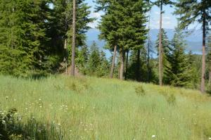 1155 Trappers Creek, Lakeside, MT 59922
