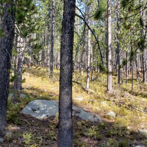 Tbd Granite Access Montrial, Philipsburg, MT 59858