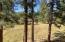 Wildlife Habitat view onto 7.36 Acres Common Area