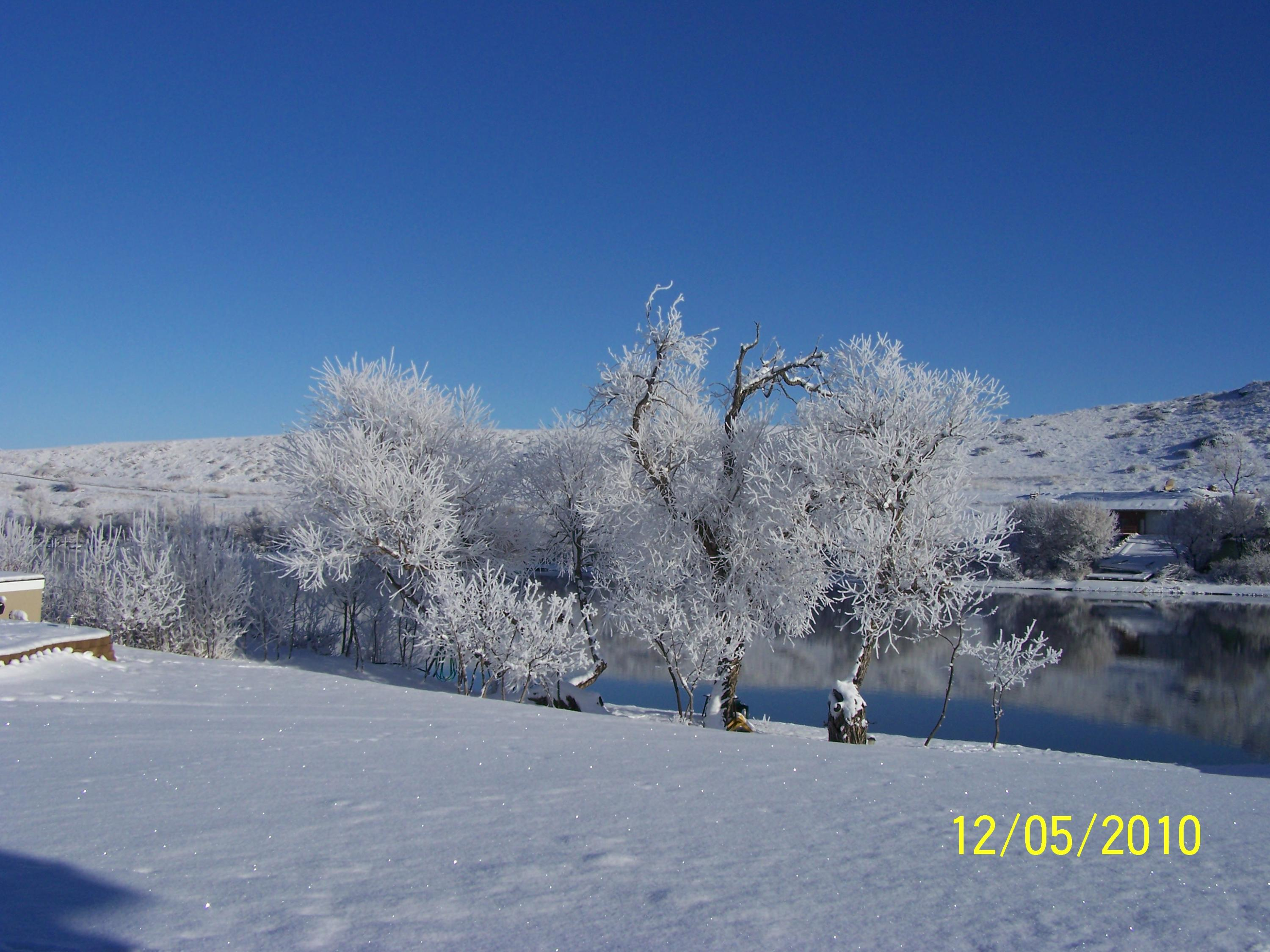 SNOW TREES ON RIVER