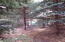 Natural wooded area between home and neighboring property.