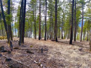 This huge lot has views of Lake Koocanusa through the USFS land and great access to the marina.