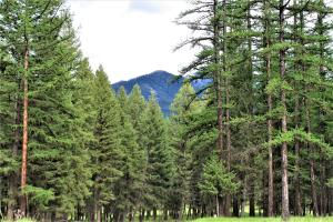 Lot 1 Crystal Lakes Drive, Fortine, MT 59918
