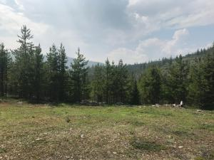 Nhn Mill Creek Road, Frenchtown, MT 59834