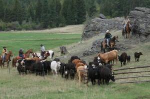 Ashley Creek Ranch