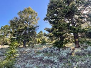 11 Pine Hill Drive, White Sulphur Springs, MT 59645