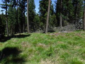 Nhn Bobcat Lane, Seeley Lake, MT 59868