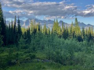 Glacier Park Views