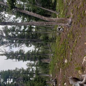 Tbd Rosa Trail, Anaconda, MT 59711