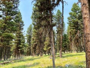 372 Seclusion Point, Seeley Lake, MT 59868